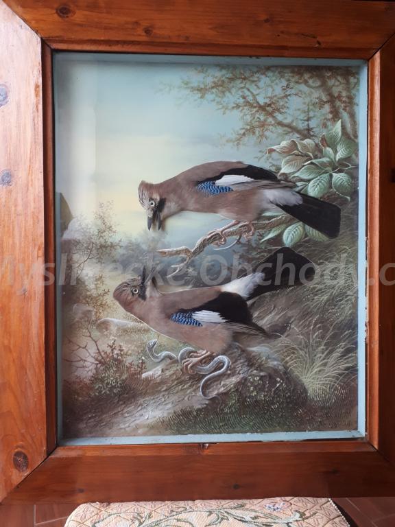 Nabízím k prodeji dva unikatní plastické obrazy s polovinami vycpaných  ptáků ....cenu prosím nabídněte! Rozměry obrazů 46x56cm fe58cfa1c2